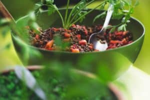 Why is eating a diet rich in plants is so important