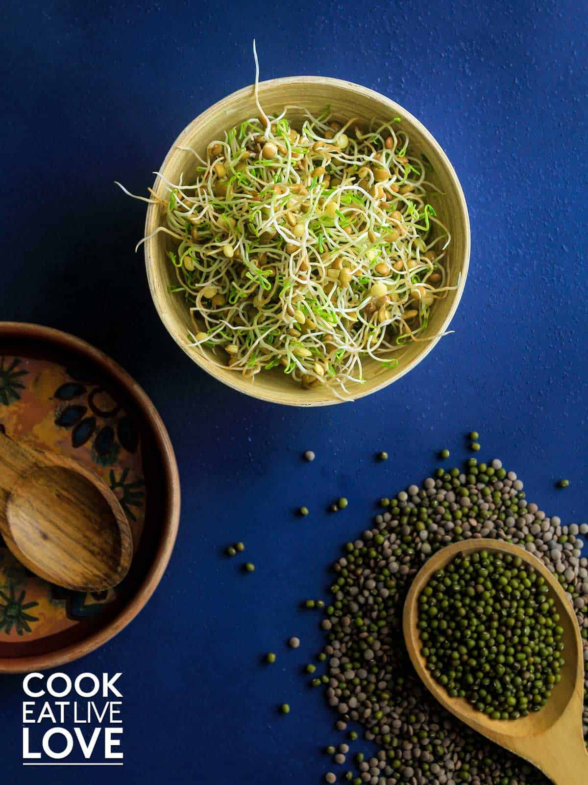Bowl of sprouts after growing them and some dried lentils and mung beans on the table