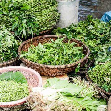 Baskets of herbs freshly cut