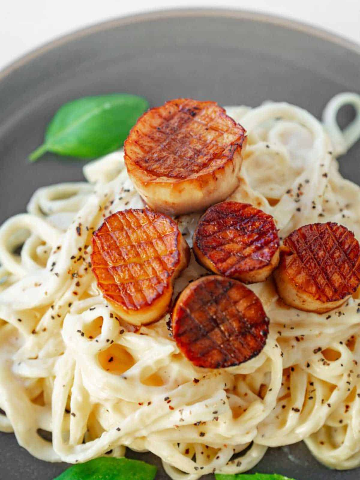 Overhead view of plate of pasta in creamy white sauce on top are vegan scallops and basil leaf on plate.